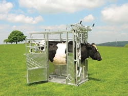 Cattle Equipment